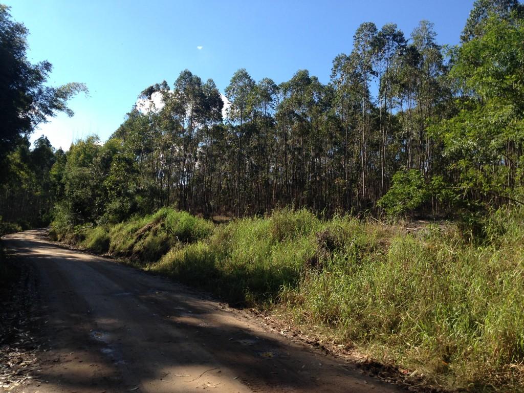 ÁREA DE TERRA COM 30.000m2 - 3HA - COSTA DA SERRA